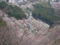 吉野へ - 花図鑑