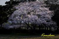 春の平城宮跡 - カンちゃんの写真いろいろ