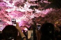 桜撮る人を撮る。 - FUTU no PHOTO