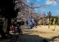 わが町の桜風景 ② - 写真の散歩道