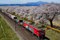 みちのく桜と電車 - みちのくの大自然