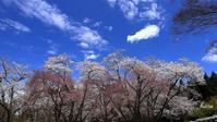 樹木公園 - 晴れ時々そよ風