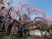 栃木しだれ桜巡り大山寺1 - 光の音色を聞きながら Ⅳ