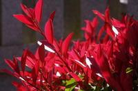 花と新緑の詩 - はーとらんど写真感