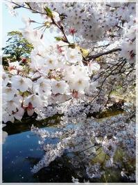 桜・さくら・サクラ・・・ - House of Lydia・・・しずかな時間