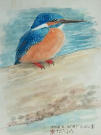 #野鳥スケッチ #ネイチャー・ジャーナル『翡翠』 Alcedo atthis - スケッチ感察ノート (Nature journal)