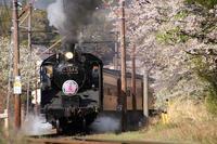 桜シーズンのSL@家山♪ - happy-cafe*vol.2