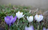 小さな春 - へっぽこな・・