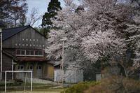 朝日小学校に春 - Studio Okamoto の 徒然日記
