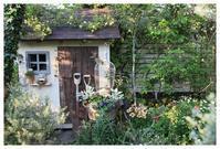 小屋の屋根に黄色く咲くモッコウバラ - natu     * 素敵なナチュラルガーデンから~*     福岡で庭造り、外構工事(エクステリア)をしてます