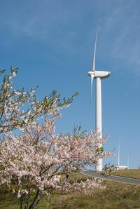 せと風の丘パーク 桜風景 - かたくち鰯の写真日記2