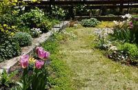 春爛漫の庭になってきたよ - miyorinの秘密のお庭