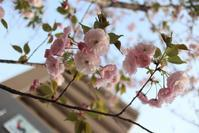 新生活☆ - 東京世田谷区(桜新町) フラワーアレンジメント教室・フラワーギフト メイフェア・フラワーズ