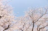 春の宴 - 相模原・町田エリアの写真サークル「なちゅフォト」ブログ!