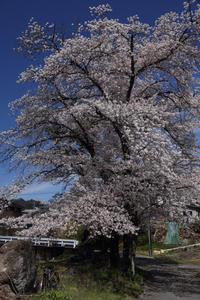 山村の桜日和 - 風の彩り-2