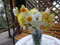 切り花水仙 - だんご虫の花