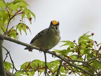 ある公園で鳥見 - たった一度の出会いから