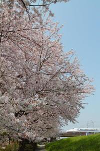 桜密度 - 新幹線の写真