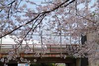 春・旬・瞬 - 新幹線の写真