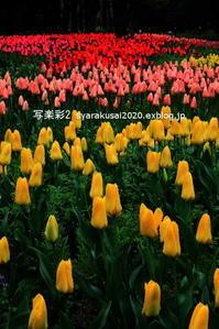 植物園による1 - 写楽彩2