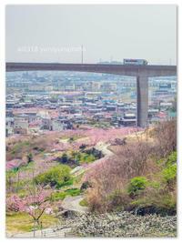 桃源郷。 - Yuruyuru Photograph