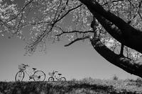 自転車のある景色 - ビール片手に