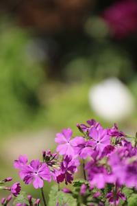 春の庭で - 光さんの日常