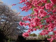2019年4月中旬茨城県西部埼玉県北県境いつもの公園 - 春ちゃんのメモ蝶3