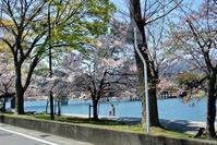 唐橋の桜 - 気楽おっさんの蓼科偶感