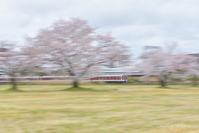 電車流し撮り^^@ 2019 桜-14 - 東大寺が大好き