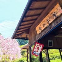 三室戸寺 花の茶屋 開店! - 【飴屋通信】 京都の飴工房「岩井製菓」のブログ