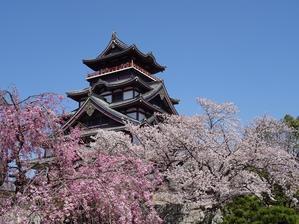 伏見桃山城の桜 - 彩の気まぐれ写真