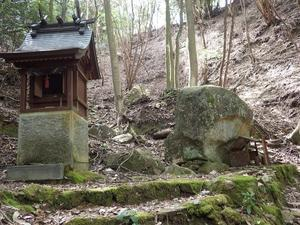 岩石山のコバノミツバツツジ -