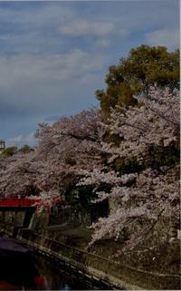 水都の桜 - 赤煉瓦洋館の雅茶子
