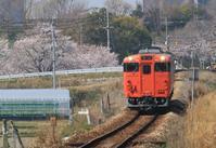桜をバックに - ゆる鉄旅情