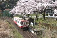 2019年・春/鉄道と桜#1-樽見鉄道 - Digital 四季彩感-森羅万象-PhotoBlog