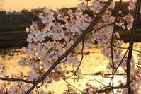 Pieces of April - SWAN