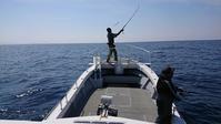 ヒラマサキャスティングジギング2019-4-13 - 五島列島 遊漁船 MANA 釣果情報 ヒラマサ