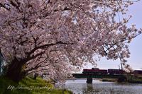 DD51と桜 - HIROのフォトアルバム