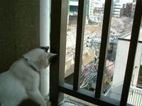 続々その二/猫尻大橋からのお知らせ - ドン・小太郎・コルリオーネ、愛と猫缶の日々