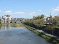 花散る川 - MOTTAINAIクラフトあまた 京都たより