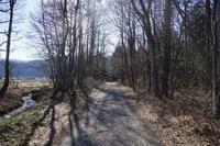やっと春が - 安曇野の蝶と自然