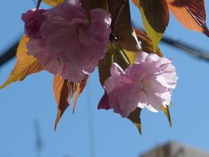 小さな春 -
