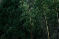 竹 - フォトな日々