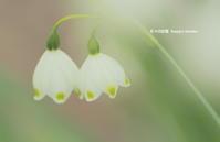 仲良し・こよし - 花々の記憶  happy momo
