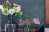 我が家の花事情 - ライ日記