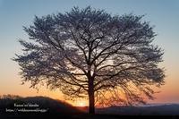 大きな桜の木の下で - *花音の調べ*