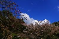桜の花は散り - kogomiの気ままな一コマ
