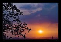 夕陽と桜 - Desire
