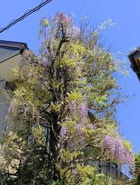 花がきれいな季節です - 日々綴り
